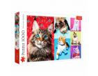 Pisici amuzante 1000 ale. art.10591